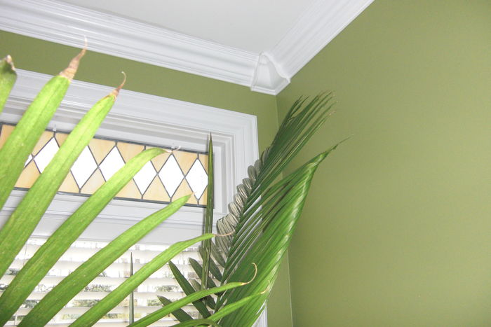 Crown Molding Design