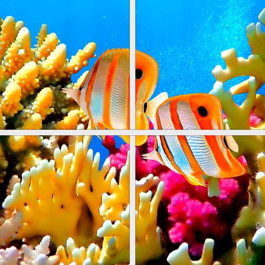 Designer clownfish chart - photo#13
